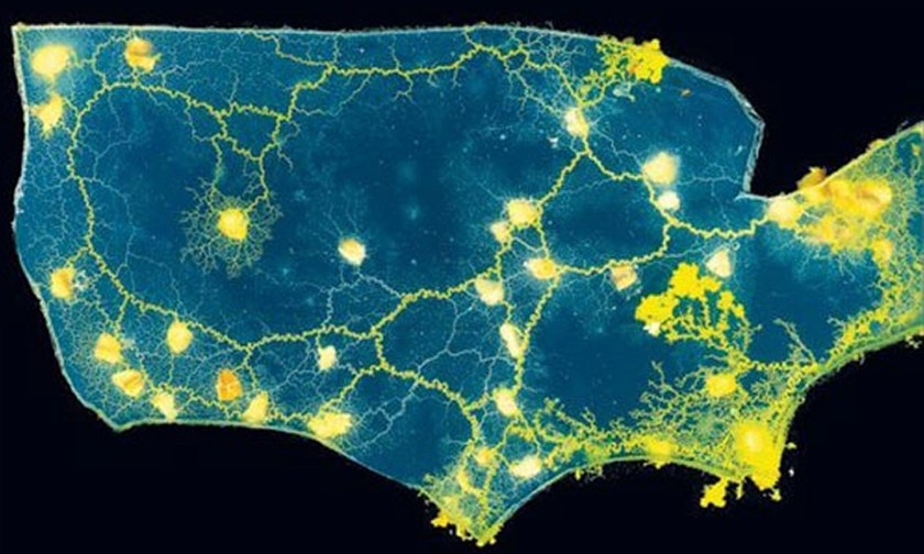 Slime-mould-maps-the-US-r-014