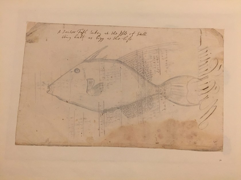 Edmond Halley Fish