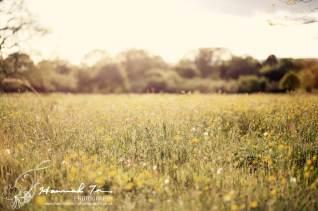 Spring light in a field