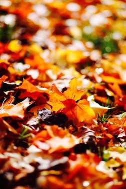 17_Autumn