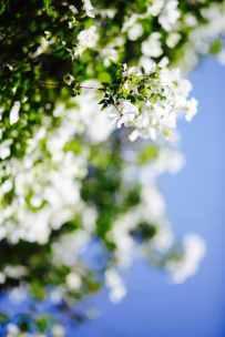 4_Spring