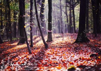 Autumn light, colours and portraits