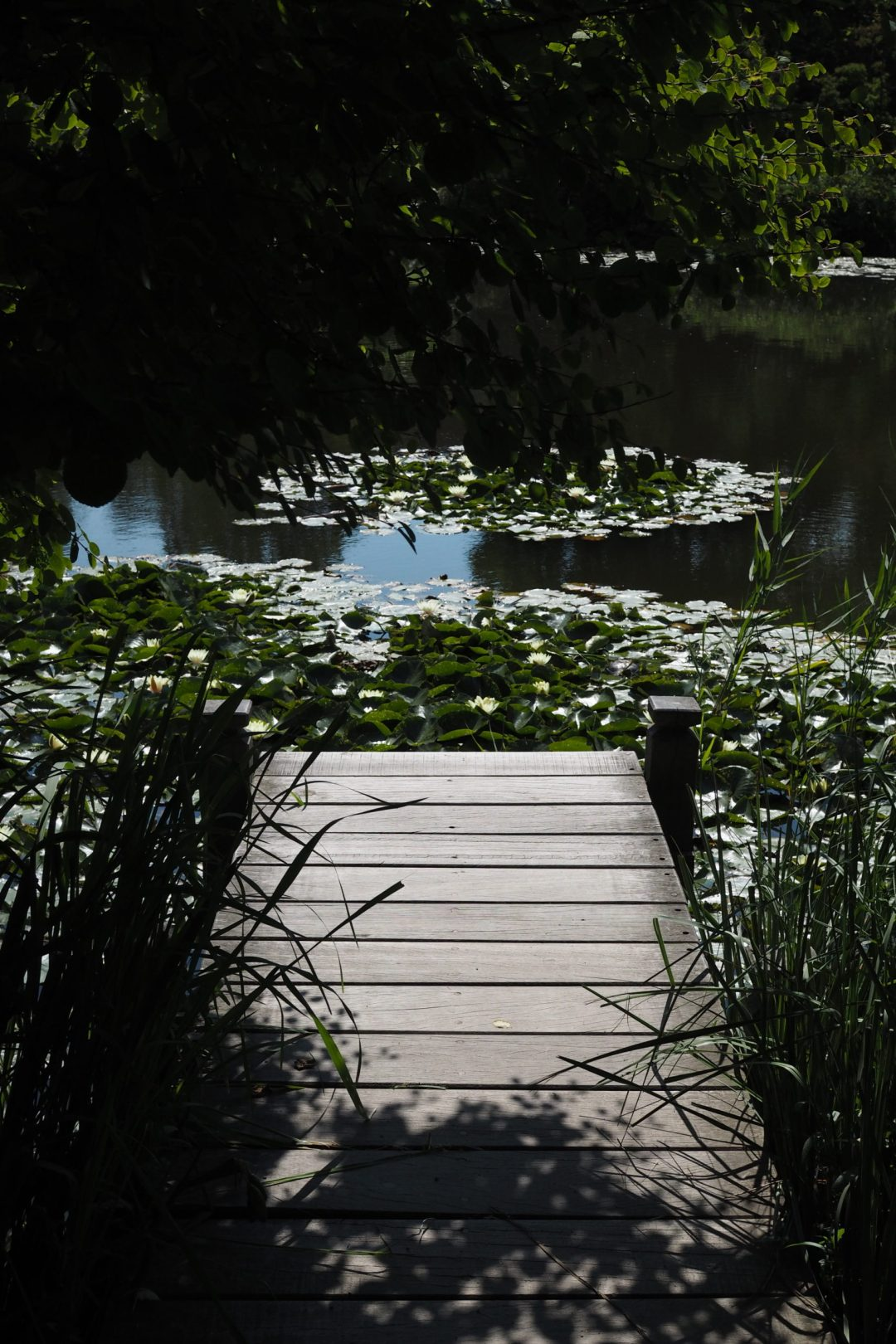 The lake, botanical gardens Copenhagen