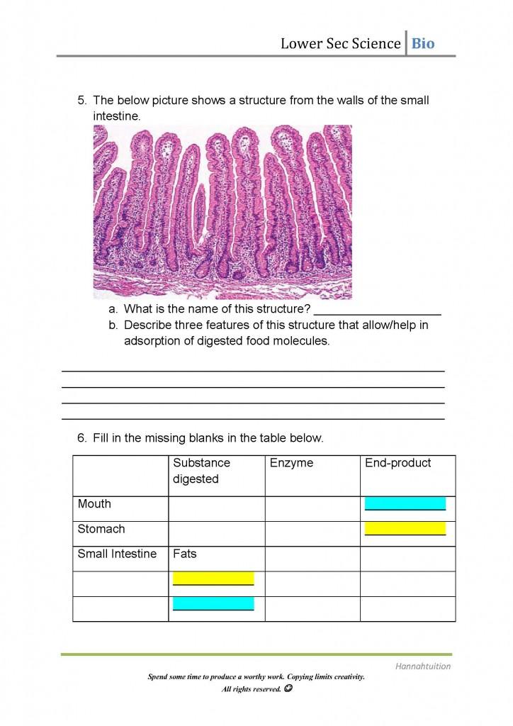 Lower Sec Digestion Worksheet