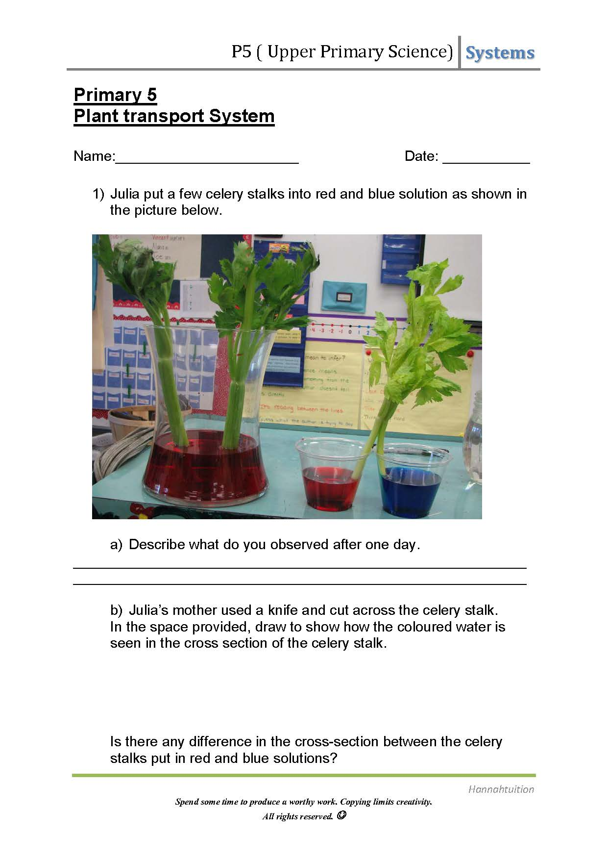 Upper Primary Science Plant Transport System
