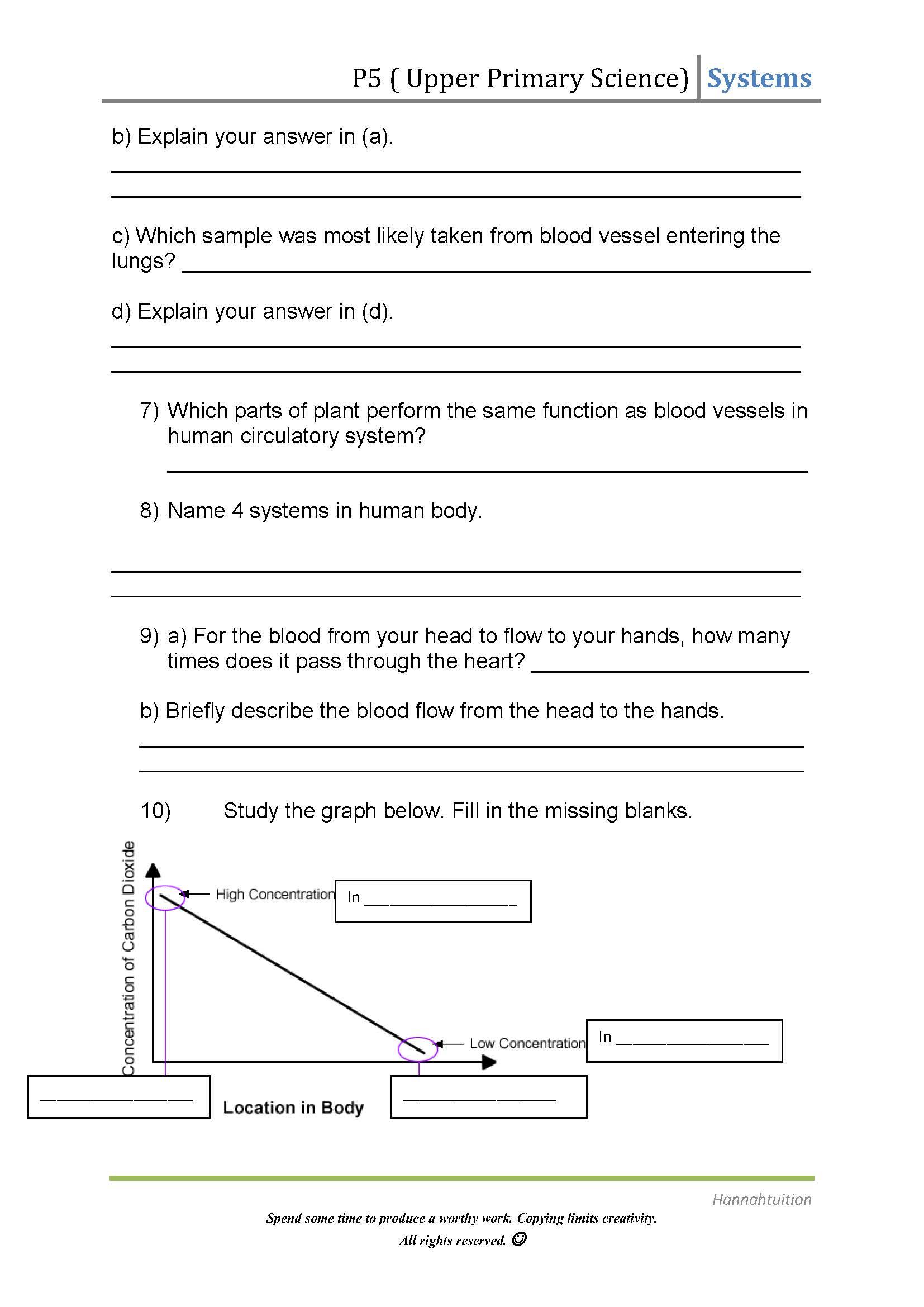 Circulatory System Worksheet Grade 4