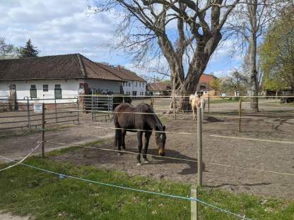 Pferdeställe