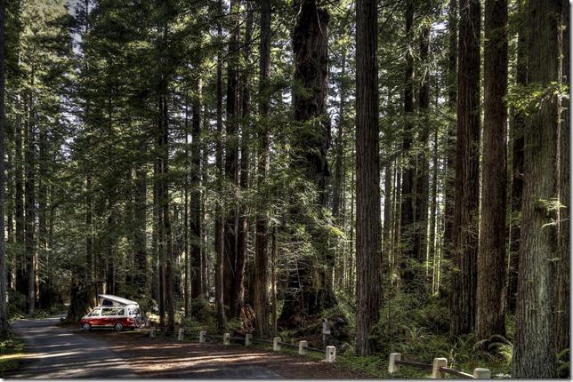 Redwood Grove Crescent City CA X