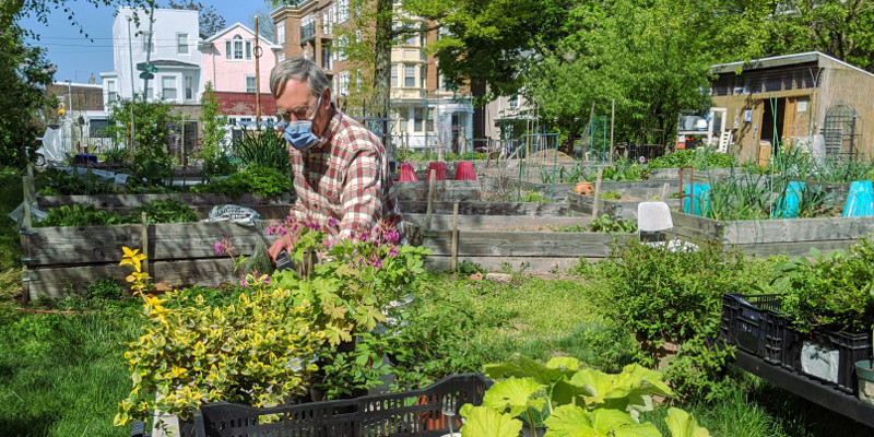 photo: man in mask tends plants