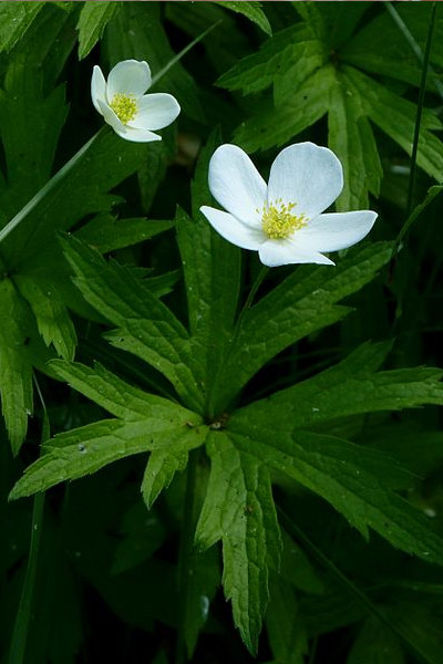photo: white flower with foliage
