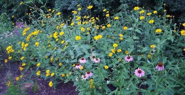 photo: flowers in landscape