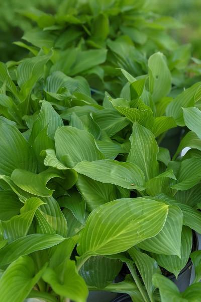 photo of green foliage