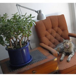 phpto: cat yawns in chair next to large potted succulent