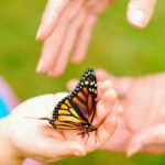 Butterfly Release | Hansen-Spear Funeral Home - Quincy, IL