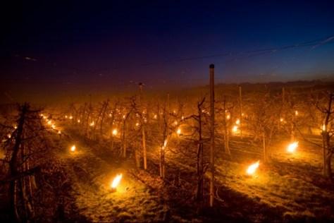 Buurmalsen. Vuurpotten in de boomgaard om de kersenknoppen te beschermen tegen de nachtvorst.  Nikon D3 • ISO 1000 • f/2.8 • 1/1 @ 20mm. © Fotografie George Burggraaff.