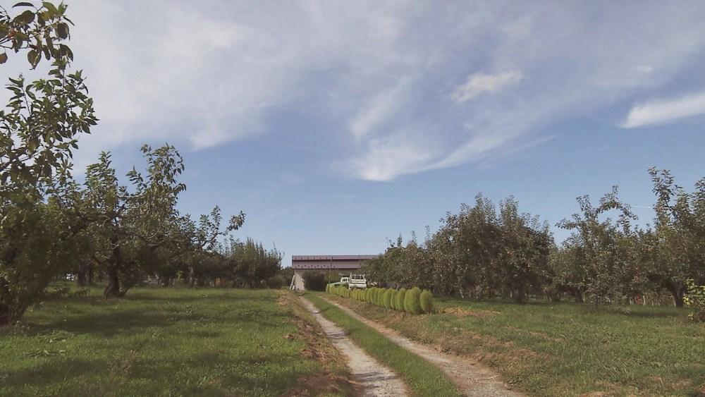 十和田市米田にある大竹農園