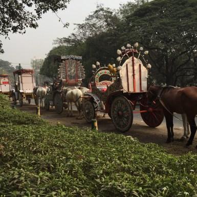 Kolkata Hourses