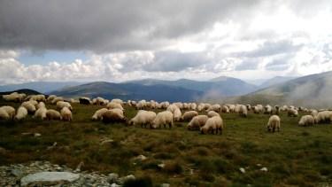 Roamin' Romania | read more at happilythehicks.com
