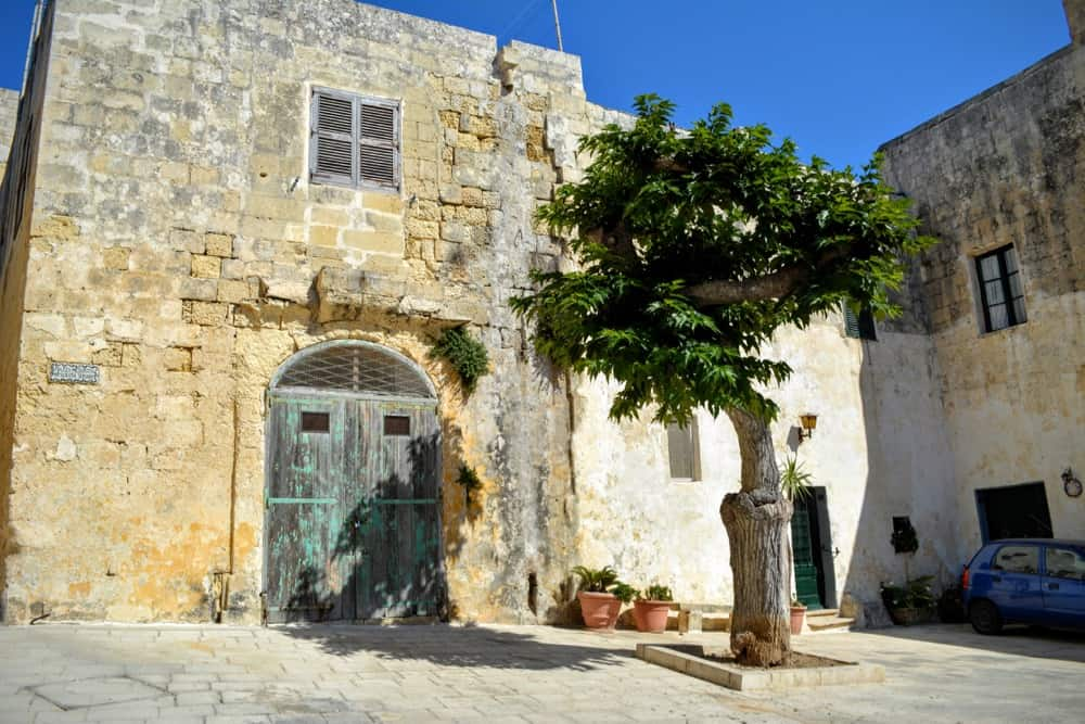 Tree and square in Mdina