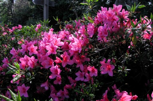 Red rhodies (1 of 1)