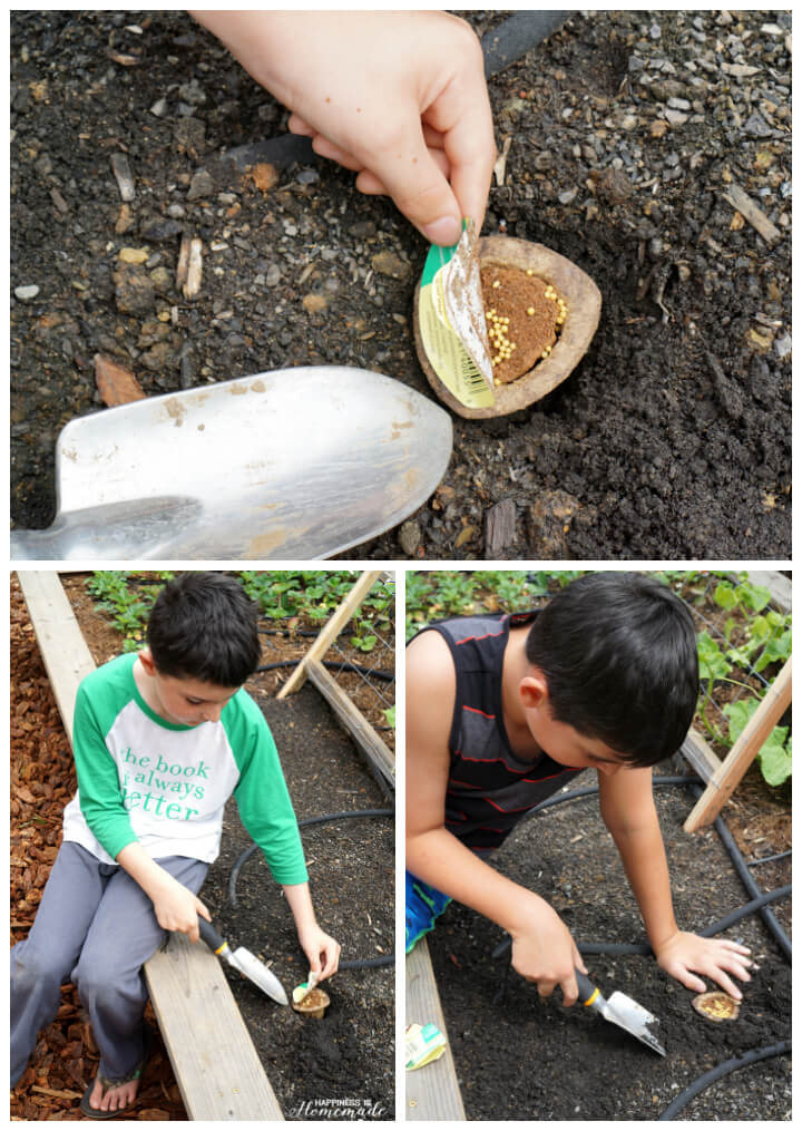 Planting Miracle Gro Gro-able Seed Pods