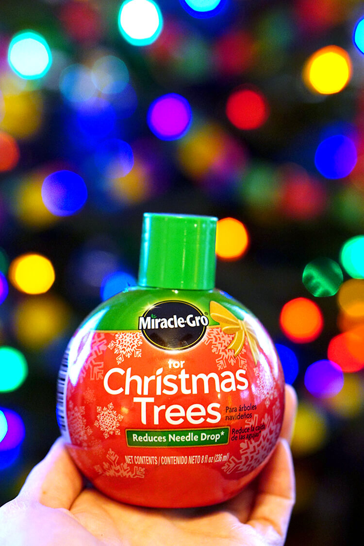 miracle-gro-for-christmas-trees