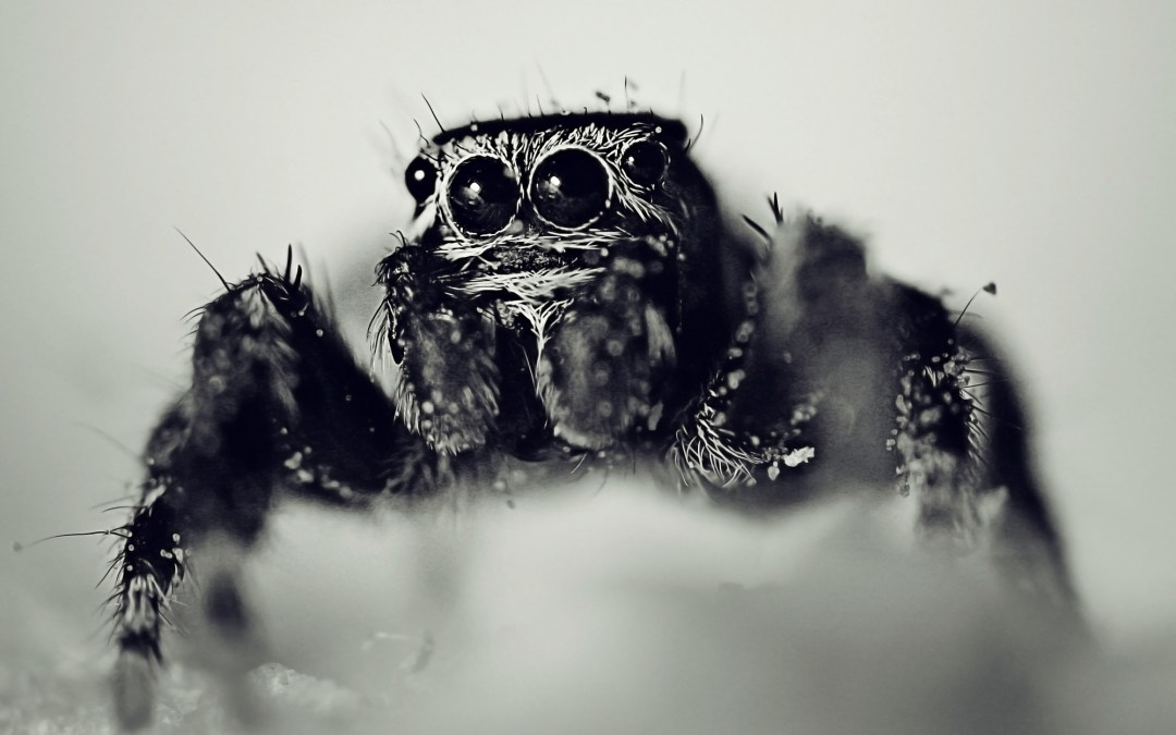 Hate Spiders, love your phobia?