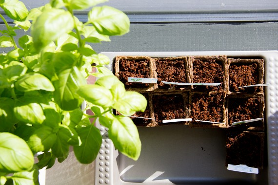 happy acorn urban jungle bloggers minimoestuin albert heijn plantjes