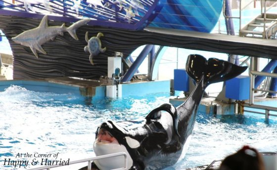 Shamu At Sea World 1