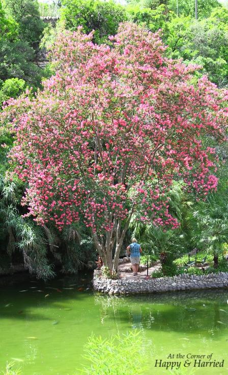 Pretty Tree at Japanese Tea Garden