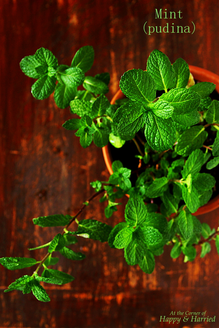 Fresh Mint Leaves for CARDAMOM MINT LASSI