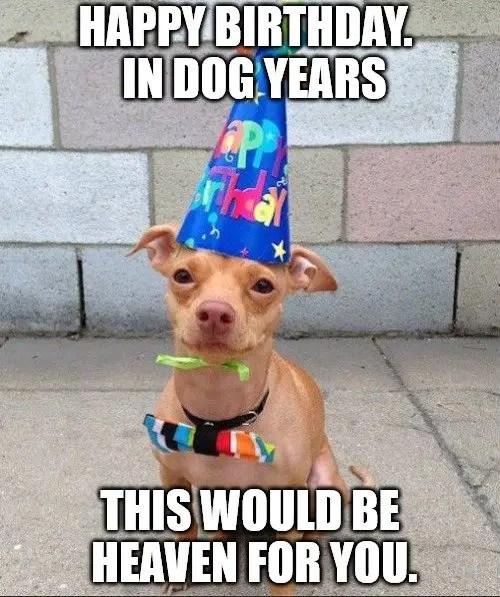 250 funny birthday wishes