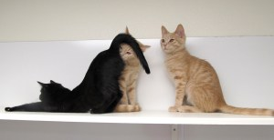 Polly, Lapis & Flint @ Happy Cats Haven