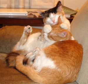 Kallie & Karmel hug