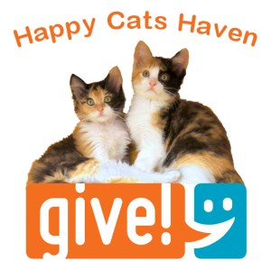 Help the kitties with Indy Give!