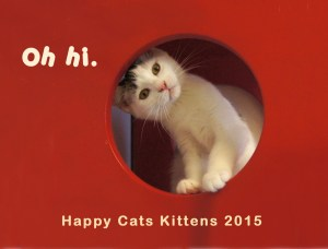 Happy Cats 2016 Kitten Calendar