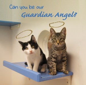 Cat Guardian Angels