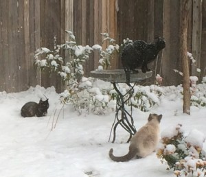 Community Cats in Winter