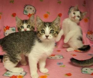 Kittens @ Happy Cats