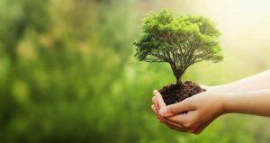 CSE et transition écologique