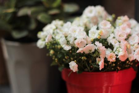 Conseils et astuces pour fleurir ses fenêtres