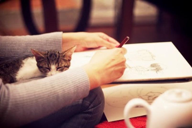 Le café des chats - Insolite - Paris
