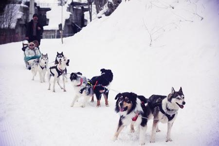 Balade en chien de traineau - Domaine des 3 Vallées