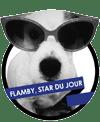 avis-Flamby