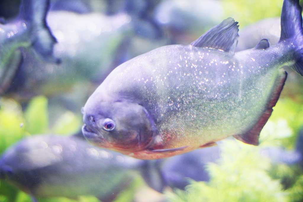 Aquarium-Dubai-01