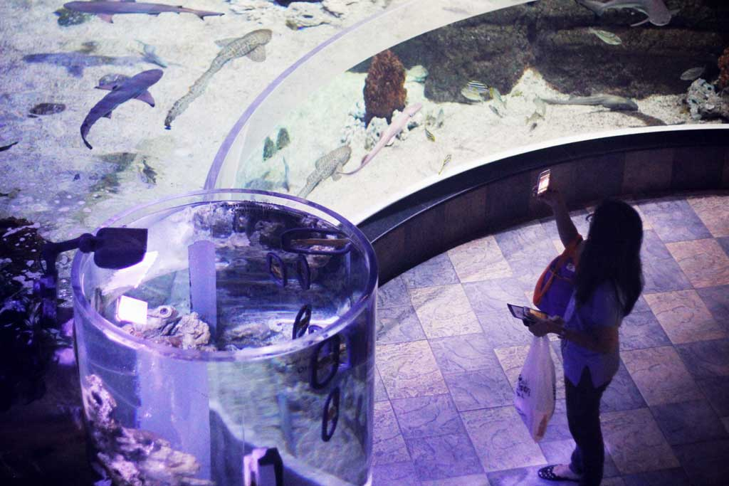 Aquarium-Dubai-15