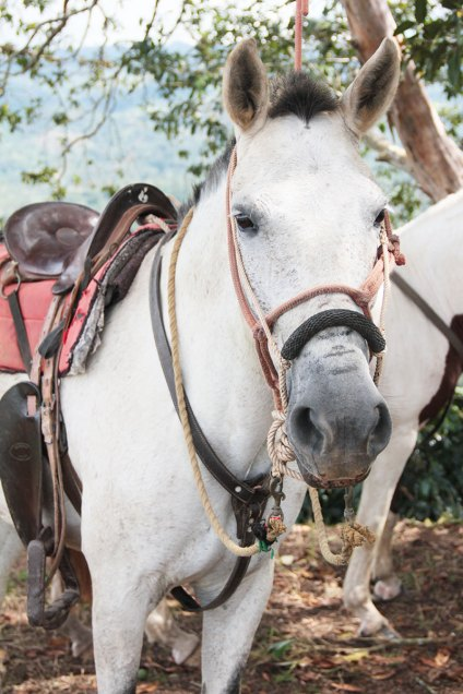 Costa-rica-voyage-cheval