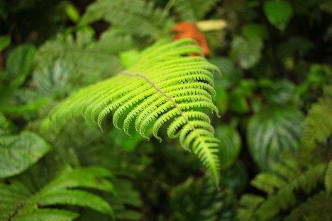 Costa-Rica-Carnet-voyage-08