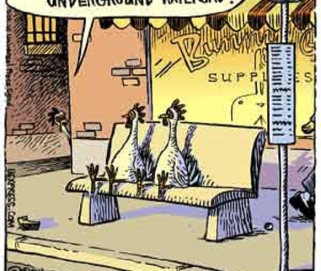 Dan Piraro Bizarro Comic Underground