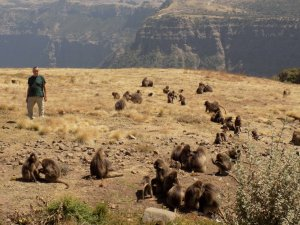 This picture shows Mark standing very close to a troop of baboons in the Simien Mountains National Park, Ethiopia